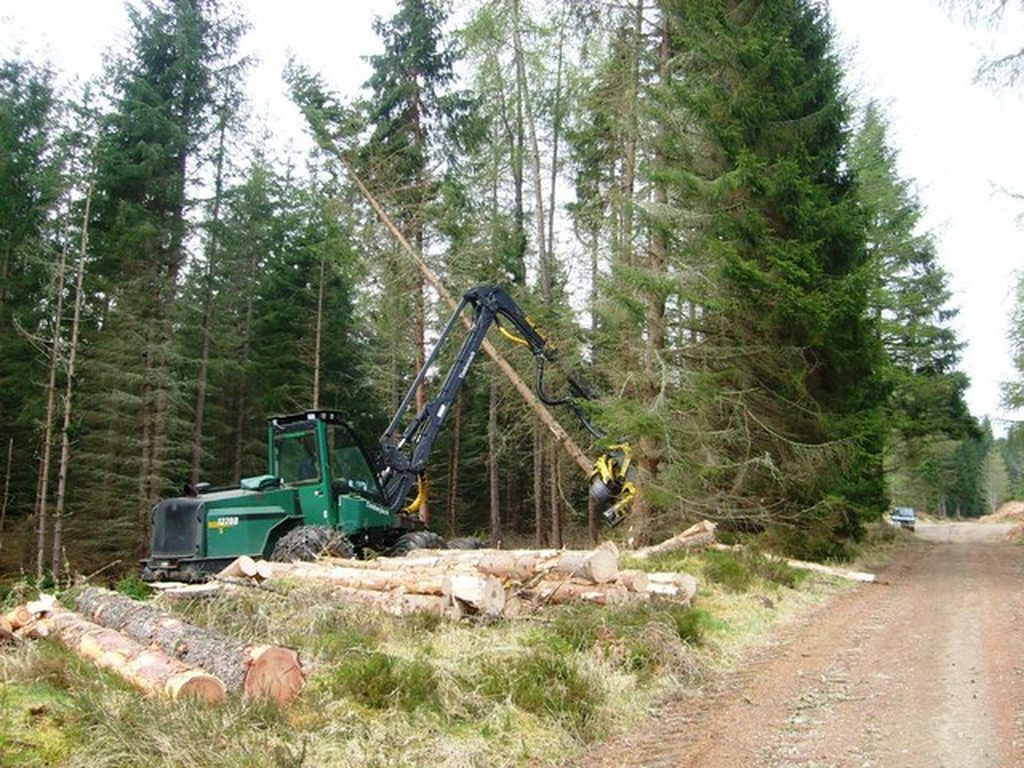 Ukraine exports illegal timber to the European Union