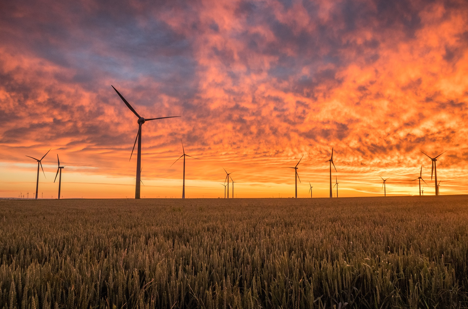 WI Daily News – Poles are one of the biggest supporters of green energy in Central Europe